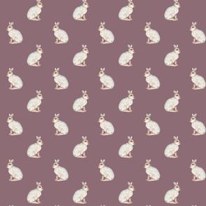 Mountain hare on plum