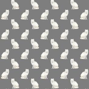 Arctic Foxes on dark grey