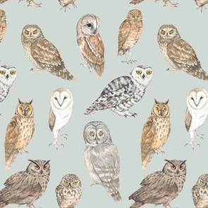 Owls of the world on blue