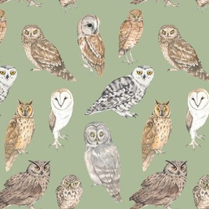 Owls of the world on green