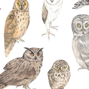 Owls of the world - larger print