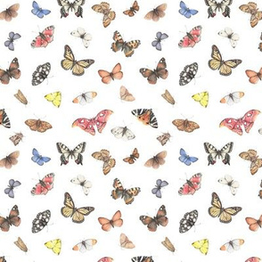 Colourful butterflies - small print