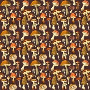 vintage fungus dark