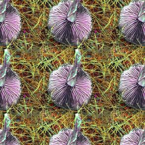 mushroom pink  tif