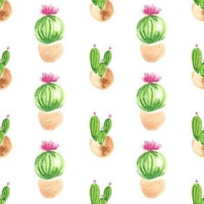 Two Cacti/cactus