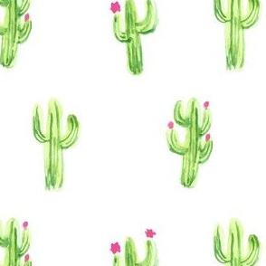 Cactus/Cacti