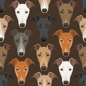 Different Colored Greyhound Dog Faces Against Brown Background