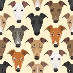 Different Colored Greyhound Dog Faces Against White Background