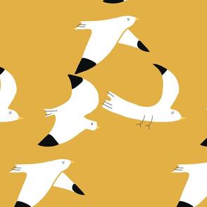 Seagulls mustard