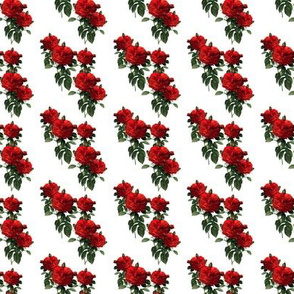 Redoute' Roses ~ Riot of Red Jumble ~ Wee