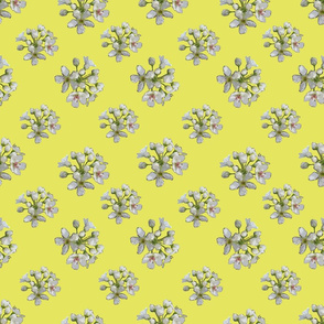 White Apple Blossoms on Lemon Yellow