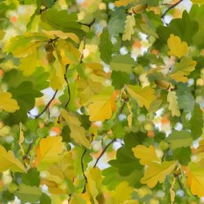 Oak Tree in Autumn colors