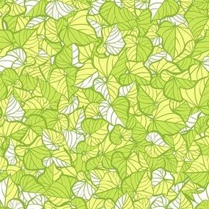Sweet Potato Green Leaves