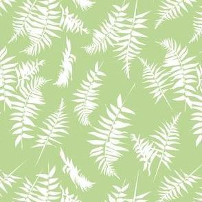 fern - white
