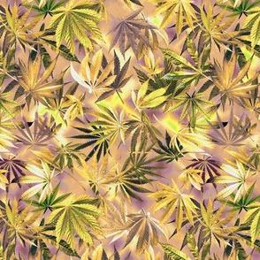 Pale Lavender Green Cannabis