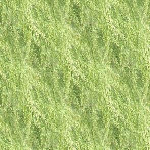 Dog Fennel | Seamless Photorealistic Wildflower Texture