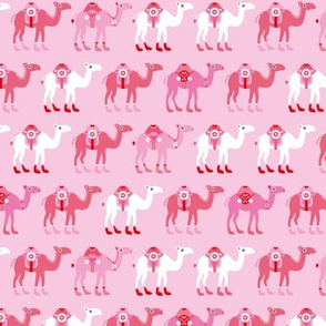 Colorful dromedary arabic summer oriental desert Camel parade pink