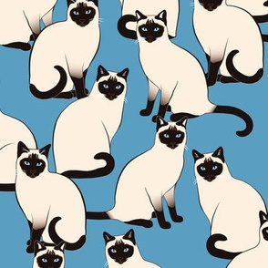 Siamese Cats Crowd on blue (Large scale)