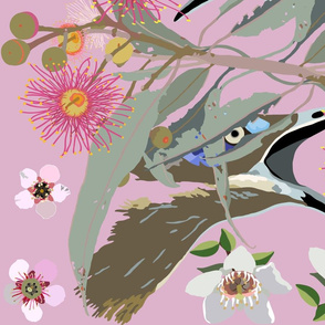 2941-HoneyEater-BlueFaced_1-Pink