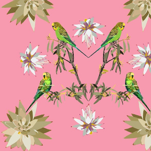 2941-Budgerigar-Johnsonia-Pink