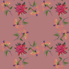 2941-Rainbow-Lorikeet2-Waratah-Dusty-Pink