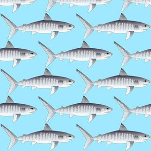 Tiger Shark on sea blue background.