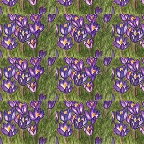 Coleus flowers original