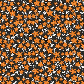 Daisies  Orange, white and black