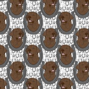 Chocolate Labrador Retriever horseshoe portraits