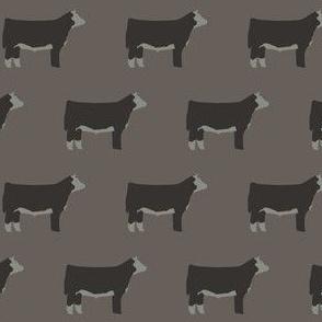 Hereford Steers on Grey