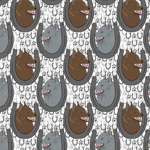 Schipperke horseshoe portraits C