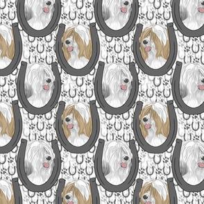 Tibetan terrier horseshoe portraits E