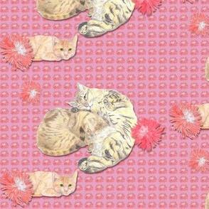 Sleepy Kitty Cats on Carnation Pink