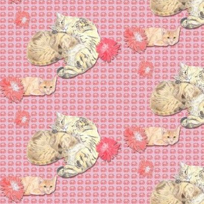 Small Size Sleepy Kitty Cats on Cameo Pink