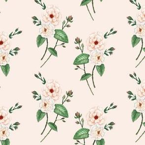 Roses_SoftPeach_PalePeachVanilla_halfdrop