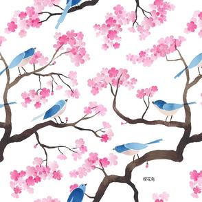 Cherry blossom birds