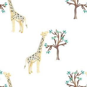 Savannah giraffe tree