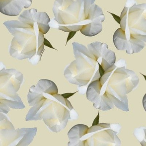 White Rosebuds on Cream