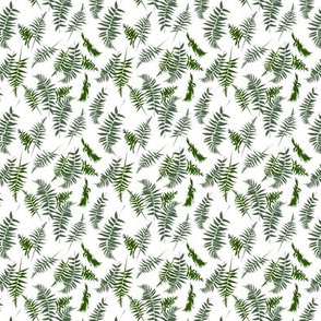 fern - light small