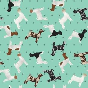 Goats Mixed Breed aqua Polkadot