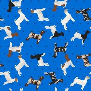 Goats Mixed Breed Blue Polkadot