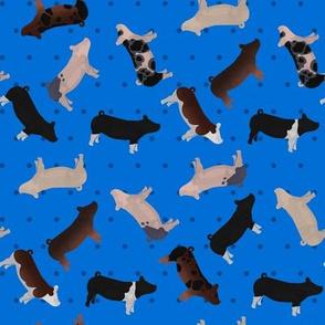 Pig Mixed Breed blue Polkadot