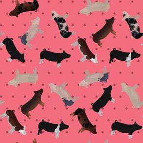 Pig Mixed Breed pink Polkadot