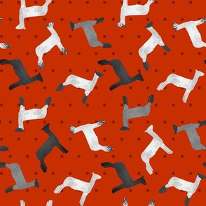 Sheep Mixed Breed red Polkadot