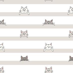 peekaboo kittens