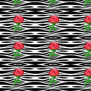 Zebra-Rose in Horizontal Rows