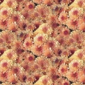 Chrysanthemums Bellini | Seamless Floral Photo Print