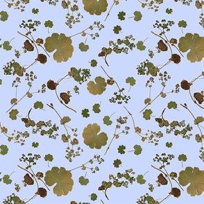 Alchemilla blue large scale