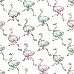 Running Ostrich Birds, Farm Animal Vintage Engraving