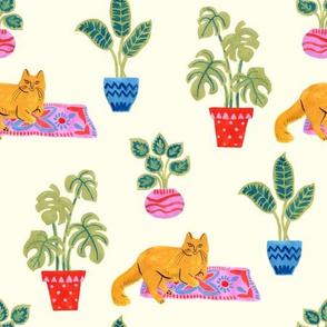 Hygge cat